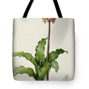 Veltheimia Capensis Tote Bag by Pierre Joseph Redoute