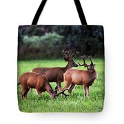 Velvet Antlers In The Sunset Tote Bag
