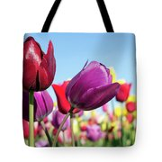 Velvet Red And Purple Tulip Flowers Closeup Tote Bag