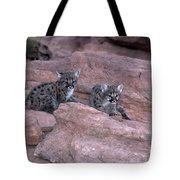 Venturing Out Tote Bag