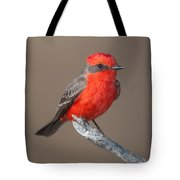 Vermilion Flycatcher Tote Bag by Clarence Holmes