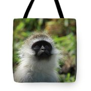 Vervet Monkey Tote Bag