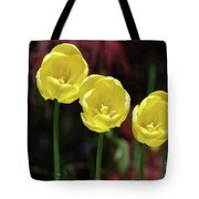 Very Blooming And Flowering Trio Of Yellow Tulips Tote Bag