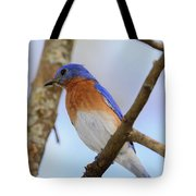 Very Bright Young Eastern Bluebird Perched On A Branch Colorful Tote Bag