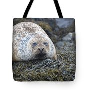 Very Chubby Harbor Seal Tote Bag