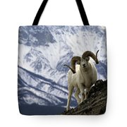 Very Large Dall Sheep Ram On The Grassy Tote Bag