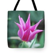 Very Pretty Blooming Pink Spikey Tulip Flower Blossom Tote Bag