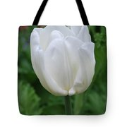 Very Pretty Blooming White Tulip In A Garden Tote Bag