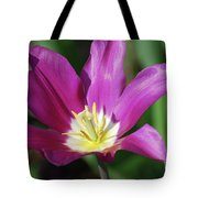 Very Pretty Dark Pink Blooming Tulip With Yellow In The Center Tote Bag