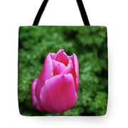 Very Pretty Garden With A Dark Pink Tulip Tote Bag