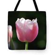 Very Pretty Pale Pink Tulip Blossom In Spring Tote Bag