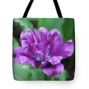 Very Pretty Purple Tulip With Dew Drops On The Petals Tote Bag