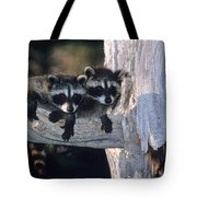 Very Young Raccoons Tote Bag