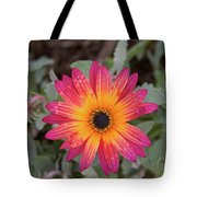 Vibrant African Daisy Tote Bag