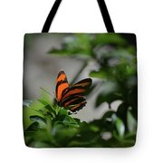 Vibrant Colors To A Orange Oak Tiger Butterfly Tote Bag