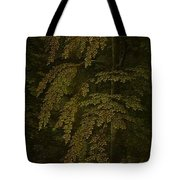View In A Forest  Outer Right Wing Of A Triptych  Gerard David  C  1505   C  1515 Tote Bag