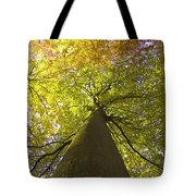 View To The Top Of Beech Tree Tote Bag