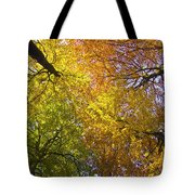 View To The Top Of Beech Trees Tote Bag