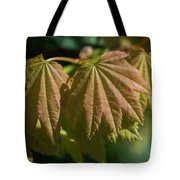 Vine Maple Leaves Tote Bag