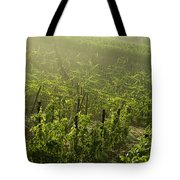Vineyards Shrouded In Fog Tote Bag