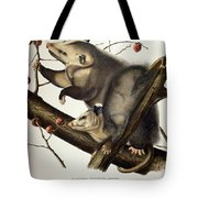 Virginian Opossum Tote Bag