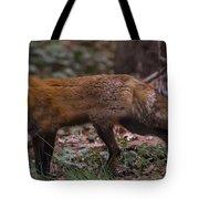 Virginian Red Fox Tote Bag