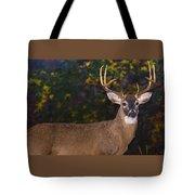 Virginian White Tail Buck Tote Bag