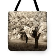 Waiting For Sunday - Holmdel Park Tote Bag by Angie Tirado