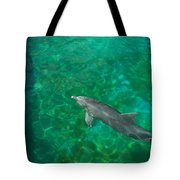 Waiting Porpoise  Tote Bag