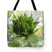 Waiting To Shine Tote Bag by David Sutter
