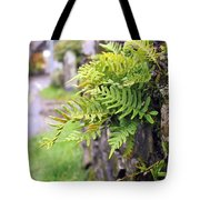Wall With Fern Tote Bag