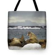 Walruses With Giant Tusks At Arctic Haul-out Tote Bag