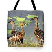 Wandering Whistling Ducks Tote Bag