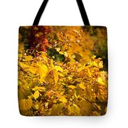 Warm Fall Colors Tote Bag