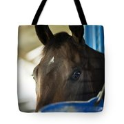 Wary Racehorse Tote Bag