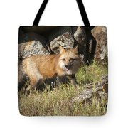 Wary Red Fox Tote Bag
