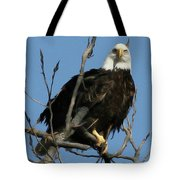 Watch On The Fox Tote Bag