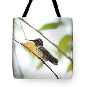 Watchful Hummingbird Tote Bag
