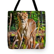 Watchful Lioness Tote Bag
