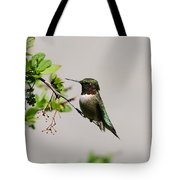 Watchful Male Hummer Tote Bag