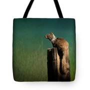 Watching Out- 365-66 Tote Bag