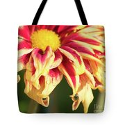 Water Drop On A Chrysanthemum Tote Bag