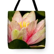 Water Lilly At Eye Level Tote Bag