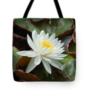 Water Lilly Closeup Tote Bag