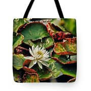 Water Lilly With Brown Pads Tote Bag