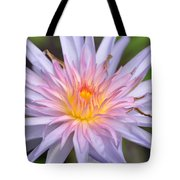 Water Lily  20 Tote Bag