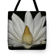 Water Lily 23 Tote Bag