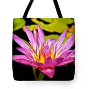 Water Lily After Rain 2 Tote Bag