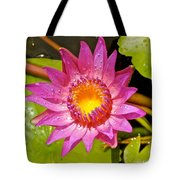Water Lily After Rain 4 Tote Bag