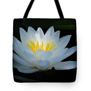 Water Lily Glow Tote Bag